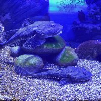 Древние рыбы :: dindin