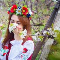 Весны цветущие сады :: Olga Volkova