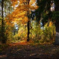 Лесная осень :: Алексей (GraAl)