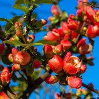 весенние цветы IMG_2341 :: Олег Петрушин