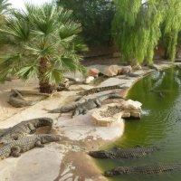 Крокодилам тоже надо отдыхать :: Raduzka (Надежда Веркина)