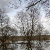 дерево в разливе :: Константин Сафронов