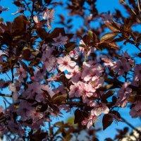 весенние цветы IMG_2330 :: Олег Петрушин