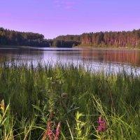 На озере в Полесье :: Александр Бойченко