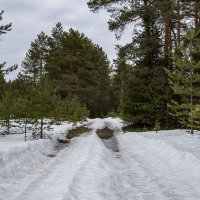 Лесная дорога. :: Андрей Дурапов