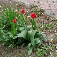 Городские цветы... :: Нина Корешкова