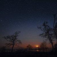 Ночная прогулка :: Елена Маковоз
