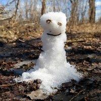 Апрельский заморыш..:) :: Андрей Заломленков