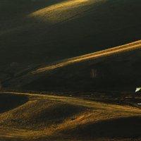 В лучах вечернего солнца 2 :: Сергей Жуков