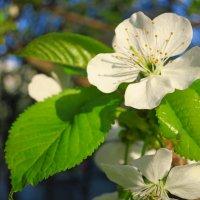 Весна!!! :: Светлана Казмина