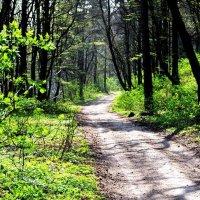 Тропинка в лесу. :: Lybov