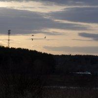 Закатные птицы :: Константин Сафронов