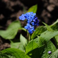 Цветок :: Анастасия Фомина