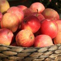 Яблочки :: Lеsя Sеmейкинa