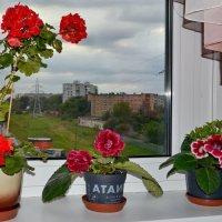 У окна :: Геннадий