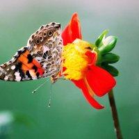 Цветок на цветке :: Ольга (crim41evp)