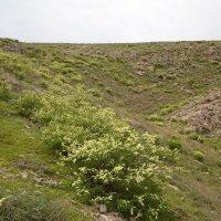 весна в скалах Жанатаса :: vladimir polovnikov