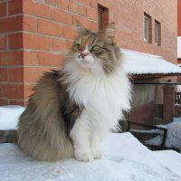 Сибиряки мороза не боятся :: Татьяна Назарова