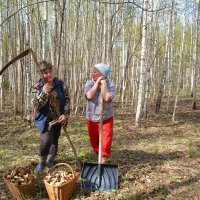 В лес за грибами) :: Елена Салтыкова(Прохорова)