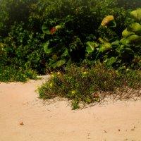 Пляжная растительность :: Олег Чемоданов
