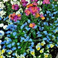 Всем  желаю  прекрасной  весенней  недели  !!! :: backareva.irina Бакарева