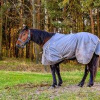 Так вот ты какой, конь в пальто..... :: Леонид Соболев