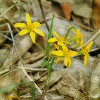 Первые цветы ... :: Арина Саенко