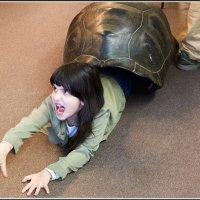 Если скрестить кошку с черепахой :: Михаил Розенберг