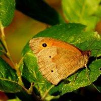про бабочек 1 :: Александр Прокудин
