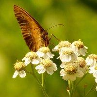 про бабочек 3 :: Александр Прокудин