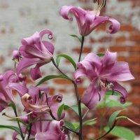 цветы :: Димончик