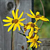 Каждой по цветку :: Leonid Rutov