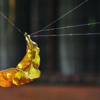 паук не будет сытым такой добичей :: Георгий