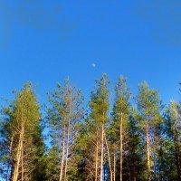 Вышел месяц из-за леса... :: Николай Масляев