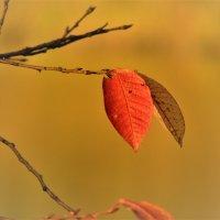 Последние листья :: Вячеслав Маслов