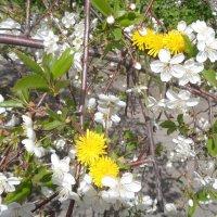 На Марсе одуванчики цветут на вишнях!... :: Алекс Аро Аро