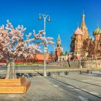 Весна в Москве :: Юлия Батурина
