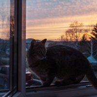 На закате :: Ирина