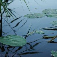 Отражение в реке :: Elena Gosteva