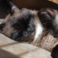 Шоколадный кот :: Марина Щуцких