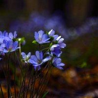 В весеннем лесу :: Татьяна Панчешная