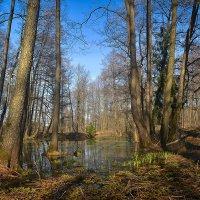 Идут деревья к водопою :: Алексей (GraAl)