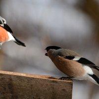 не зли меня! :: linnud