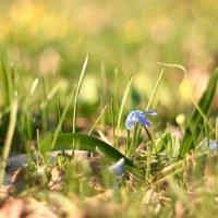 Нежная весна :: Minowara Sam