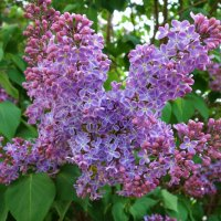 """""""Запевающий сон, зацветающий цвет..."""" :: Galina Dzubina"""
