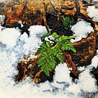 Снег я последний отгрёб, листочкам помочь ведь дело благое весною..:) :: Андрей Заломленков