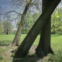 Пьяные деревья :: Татьяна Каримова