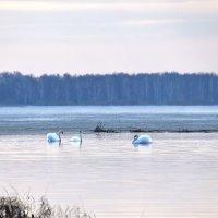 На озере в апреле :: Геннадий Ячменев