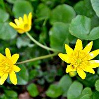 Апрельские цветы. :: Михаил Столяров