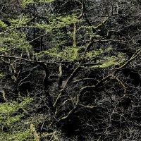 Новый старый лес :: Игорь
